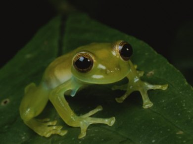 LittleGreenFrog